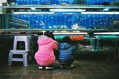 八斗子/碧砂漁港 (Godspeed Lee) Tags: family winter boy fish classic film girl rain kids 35mm fuji market voigtlander iso contax 400 fujifilm g2 冬天 海 g35 家人 水族箱 小孩 漁港 雨 富士 碼頭 八斗子 姐弟 底片 碧砂 戶外 魚市