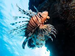 IMG_0960 (eye[4]eye) Tags: egypt diving gypten tauchen bluewaves