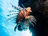 IMG_0960 (eye[4]eye) Tags: egypt diving ägypten tauchen bluewaves