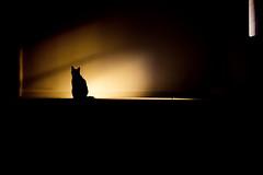Top cat (stocks photography.) Tags: cat blackcat photographer topcat michaelmarsh