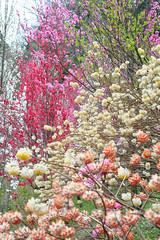 20160403-DSC_5822.jpg (d3_plus) Tags: sky plant flower macro nature rain japan walking nikon scenery waterdrop bokeh hiking drop daily rainy bloom  28105mmf3545d nikkor  wildflower  kanagawa   aftertherain dailyphoto   thesedays sagamihara 28105   dogtoothviolet   28105mm     zoomlense shiroyama    erythroniumjaponicum    28105mmf3545 d700 281053545  nikond700 aiafzoomnikkor28105mmf3545d  28105mmf3545af dogtoothvioletvillage aiafnikkor28105mmf3545d
