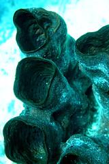 tubes (loose-ends) Tags: coral dive honduras diving roatan reef sponge bearsden