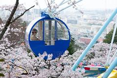 A quiet moment (Wunkai) Tags: japan  cherryblossom ferriswheel amusementpark sakura    ibarakiken hitachishi  kaminepark