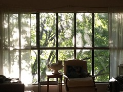 Pearl in the window (Philosopher Queen) Tags: trees sunlight window cat chat shadows kitty study gato blinds pearl
