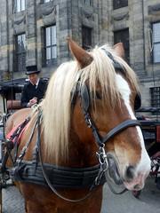 Paardenkoets002 (Quetzalcoatl002) Tags: horse amsterdam coach dam horsedrawn damsquare paardenkoets koetsjes