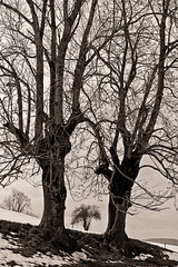 Vercors, 2016 (Olivier BERTRAND) Tags: trees winter blackandwhite nature monochrome forest canon landscape noiretblanc hiver naturallight dslr paysage vercors arbre fort digitalphotography blackandwhitephotography canon50mm canonef50mmf14usm isre canonlens olivierbertrand canon5dmark2