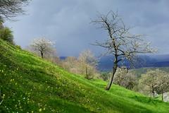 Landscape (gerhardschorsch) Tags: zeiss landscape thringen sony wiese 55mm fe f18 landschaft za frhling kahla leuchtenburg obstblte ilce7r