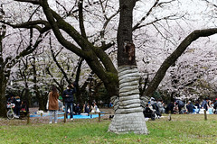 20160405-051-Picnics under Yoyogi-koen cherry blossoms (Roger T Wong) Tags: travel people holiday japan garden balloons tokyo spring picnic crowd harajuku cherryblossoms canonef1740mmf4lusm yoyogikoen 2016 canon1740f4l canoneos6d rogertwong