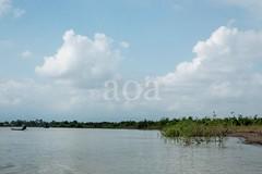 H504_3107 (bandashing) Tags: trees england sky water forest river manchester boat flood monsoon swamp land riverbank sylhet bangladesh socialdocumentary ghat aoa bandashing ratargul akhtarowaisahmed goyainnodi