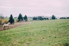 Idyllic (freyavev) Tags: horse green grass fence germany landscape deutschland thüringen village cloudy farm thuringia land idyllic whitesky vsco triebes
