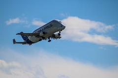 Beluga (xwattez) Tags: france plane airport european aircraft airbus transports toulouse beluga aeropuerto blagnac avion 2016 aéroport européen véhicule