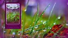 Purple Rain (nyomee wallen) Tags: sorry loss wonderful dead sad good prince tribute fans purplerain borninusa brucespringsting iconicmusicalgenius iconicmusicalgeniusprince