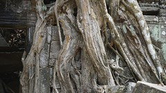 Somebody is watching you.. (picturesfrommars) Tags: cambodia kambodscha siem angkor ta prohm reao a6000 selp1650
