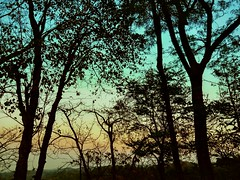 Colours of the wind. (sahilasanzana) Tags: colors silhouette colours wilderness sylhet bangladesh intothewild colorsofthewind