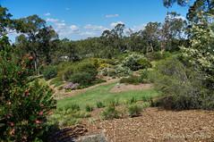 Brisbane Botanic Gardens (Tatters ) Tags: park garden lawn australia botanicgarden mcbgb oloneo