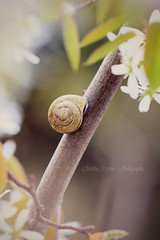 """All is well in my world."" (Sandra Kppen 