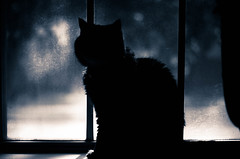 I'm Right Here Waiting (Explored) (Kenny Dong) Tags: street windows light shadow blackandwhite pet cats pets storm window rain silhouette night cat canon blackwhite kitten waiting shine bokeh kittens depthoffield wait