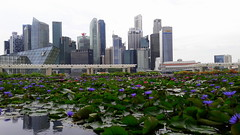 The Blossom City (stardex) Tags: city plant flower building floral skyline architecture skyscraper flora singapore lotus bloom marinabay