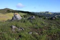 Azalea Hill (Ray Bouknight) Tags: green nature rock outdoors spring hiking marincounty 2016