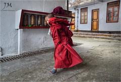 || The Little Monk || (joydeepmukherjee322) Tags: buddhist monastery devotee tamron1750mmf28 littlemonk nikond7000