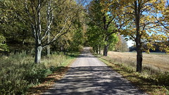 #cycle148HKI: Westerkullan kartano (hugovk) Tags: cameraphone autumn finland cycling nokia helsinki october hvk vantaa syksy carlzeiss uusimaa 2015 808 kartano helsingin hugovk geo:country=finland camera:make=nokia pureview exif:flash=offdidnotfire exif:aperture=24 westerkullan nokia808pureview exif:orientation=horizontalnormal camera:model=808pureview exif:exposure=1392 geo:locality=vantaa uploaded:by=email exif:exposurebias=0 exif:focallength=80mm exif:isospeed=64 geo:region=uusimaa geo:county=helsingin cycle148hki meta:exif=1452178715 cycle148hkiwesterkullankartano