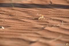 3-Oman-Desert-Marathon-day-3_5556
