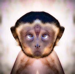 p r e - c o c i o u s (epiclectic) Tags: reflection animal photoshop mirror design graphic wildlife humor perspective manipulation images symmetry reflect symmetrical mutant twisted enhancement epiclecticcom epiflection epiflectionbyepiclecticcom