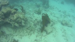 pennekamp_09 (ericvdb) Tags: statepark snorkeling floridakeys keylargo johnpennekamp