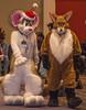 DSC_2625 (Acrufox) Tags: chicago illinois furry midwest december ohare rosemont convention hyatt regency 2014 fursuit furfest fursuiting acrufox mff2014
