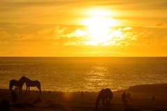 Orange horses (riquelme.guillermo) Tags: sunset horse easter island caballo atardecer isla rapanui isladepascua nui rapa tahai