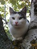 i musciii (robgarbage) Tags: cats white cat countryside kitten pussy kittens campagna felino felini puss gatto bianco gatti musci