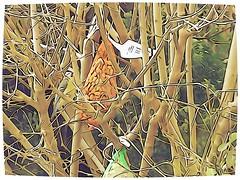 DSC02031 (1) (Enrico Luigi Delponte) Tags: birds sony vogels uccelli sonyfuncamera