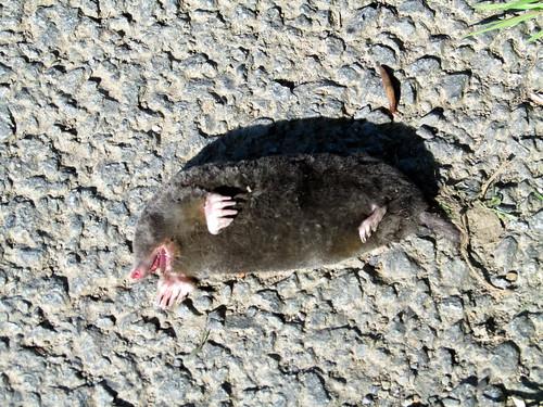 An Ex Mole