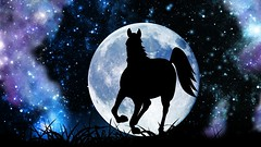 Moon Horse HD (Larah McElroy) Tags: sky horses horse moon art silhouette night digital photoshop stars graphicdesign artwork galaxy nightsky equine equines horsesilhouette