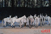 DSC_0064 (NotaUtil) Tags: horses canada by caballos media irvine preview nota cavalia sneak util odysseo notautil