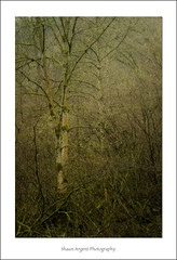 Signs (shaun.argent) Tags: morning trees winter tree nature water weather woodland woods seasons hackfall shaunargent