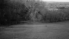 Little (Bourguiboeuf) Tags: leica portrait bw white man black france guy film monochrome face analog forest 35mm de french landscape vent la countryside nikon noir cityscape wind kodak head walk tx horizon trix ishootfilm nb dude d76 summicron morte 400 portraiture push lecorbusier paysage et campagne coolscan 800 foret blanc m6 asph feuilles homme tete couvent visage argentique pellicule tourette filmisnotdead homedev le filmfeed bourguiboeuf ibelieveinfilm corbusier couvent tourette