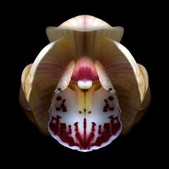 Cymbidium O (Pixel Fusion) Tags: orchid flower macro nature flora nikon cymbidium d600