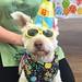 Zhazi's Birthday