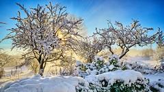 Solheim, Norway (Vest der ute) Tags: trees winter sun snow norway landscape rogaland g7x ryksund