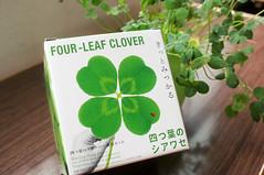 四つ葉のクローバー 画像32