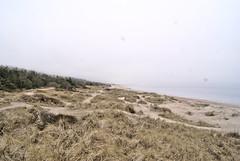 Foggy Beach (ibbadib) Tags: trees sky beach nature water grass fog pine sand solitude alone sad february melankoli aloneinnature