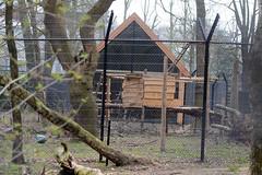 Ouwehands Dierenpark Rhenen (Ulli J.) Tags: netherlands zoo utrecht nederland paysbas rhenen niederlande ouwehandsdierenpark sunbear maleisebeer honingbeer malaienbr nederlandene oursdescocotiers malajbjrn