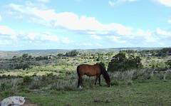 caballito (beatriz vidal berrio) Tags: nature villaserrana minas uruguay lavalleja caballo sierras