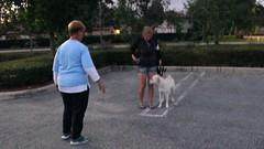 Dog Obedience Graduation (5) (marlinsgirl93) Tags: 2016 dogobedience 10millionphotos wellingtonfl