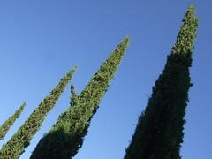 Cyprs de Florence (cristoflenoir) Tags: naturism italie naturismo agriturismo naturisme agricola azienda cyprs terranera fastig
