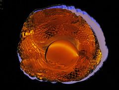 Amber Specimen (Ellsasha) Tags: amber era preserved gems dinosaurs preservation thegalaxy