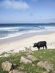 Vacaciones en el mar (P.P.Sanchez) Tags: playa cdiz bolonia tarifa vaca