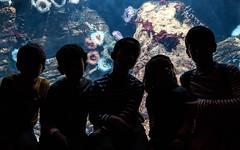 Daniela, Pepe, Antonio, Juan y Pablo (fruizh) Tags: portugal juan lisboa pablo daniela pepe acuario expo98 2016 antoito fruizh