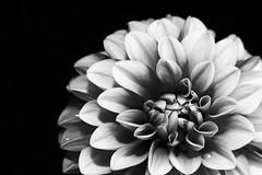 20160422_0023 (teufelkamera) Tags: flower macro tube extention kenko